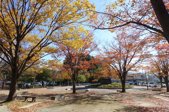 緑が丘スポーツ公園 紅葉 見頃