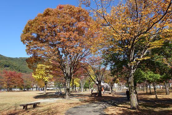 秋 緑が丘スポーツ公園