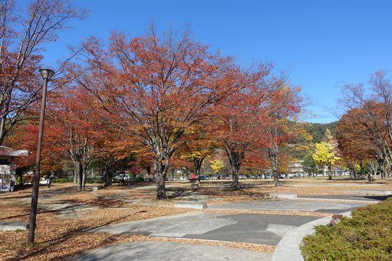 緑が丘スポーツ公園 桜 紅葉