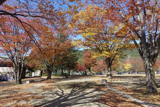 緑が丘スポーツ公園 ピクニック