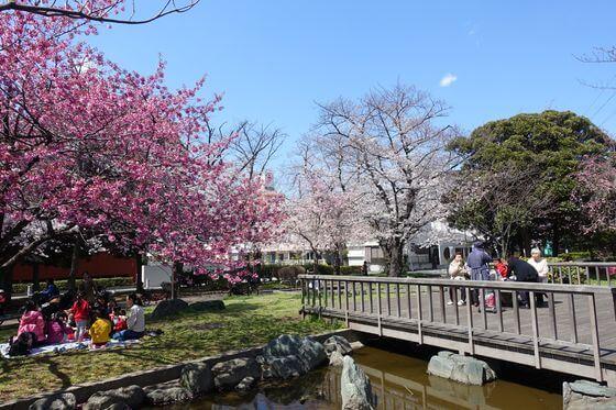 足立区 桜