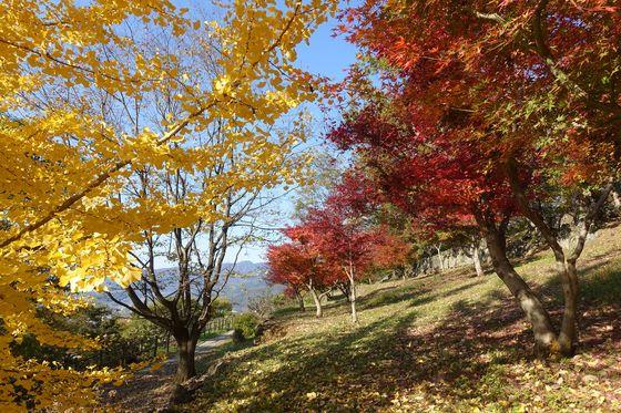 塩山ふれあいの森総合公園 紅葉 見頃