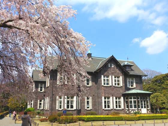 旧古河庭園 北区 桜