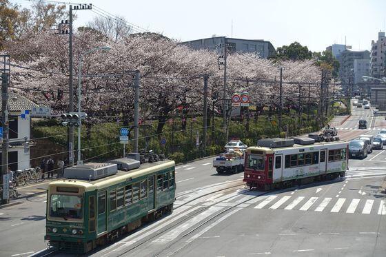 飛鳥山公園 北区 桜