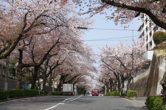 赤羽桜並木通り 北区