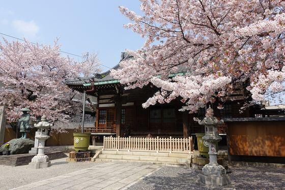 宝幢院 北区 桜