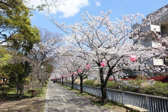 仙台堀川公園 江東区 桜
