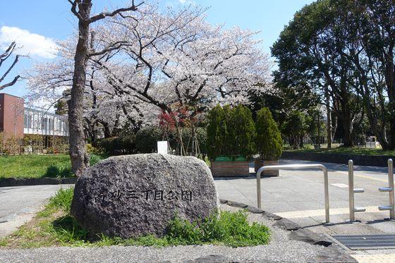 南砂三丁目公園 江東区 桜