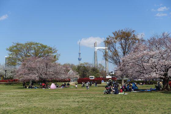 木場公園 江東区 桜