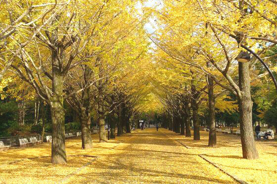 光が丘公園 練馬区 紅葉