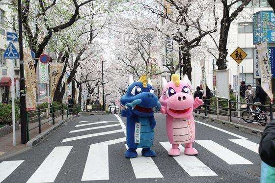 渋谷桜丘さくら通り 桜