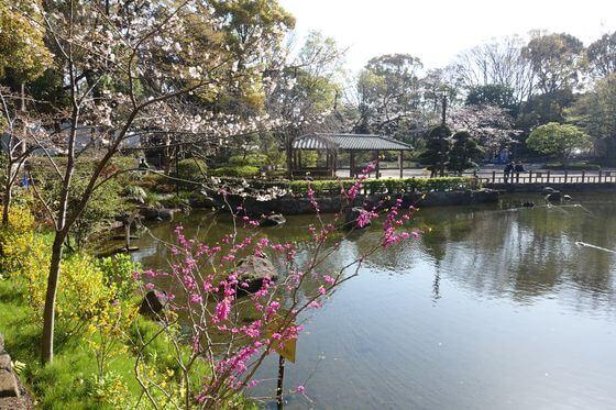戸越公園 品川区 桜