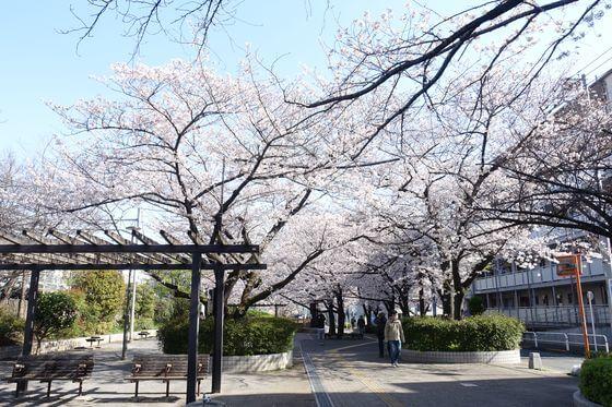 大井水神公園 品川区 桜