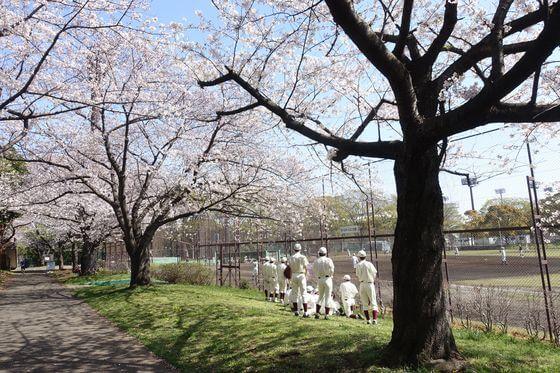 大井ふ頭中央海浜公園 品川区 桜
