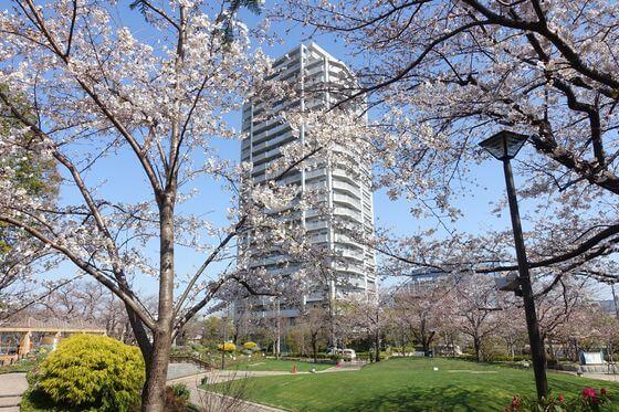 しながわ中央公園 桜