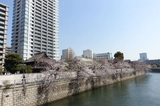 目黒川 品川区 桜