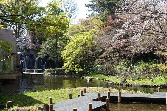 御殿山庭園 品川区 桜