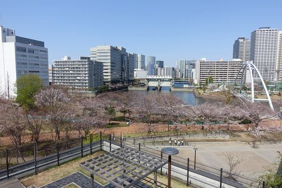 東品川海上公園 桜