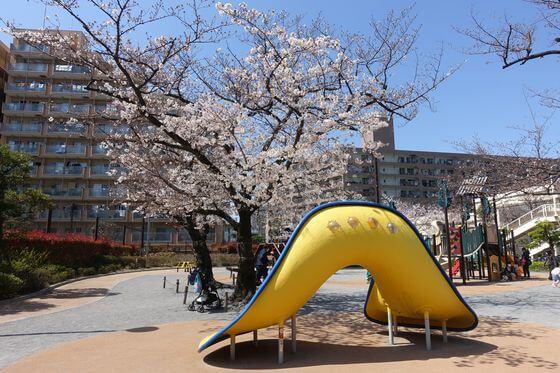 東品川公園 桜