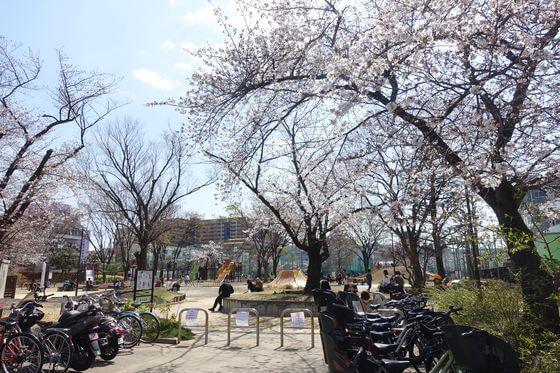 鮫洲運動公園 品川区 桜