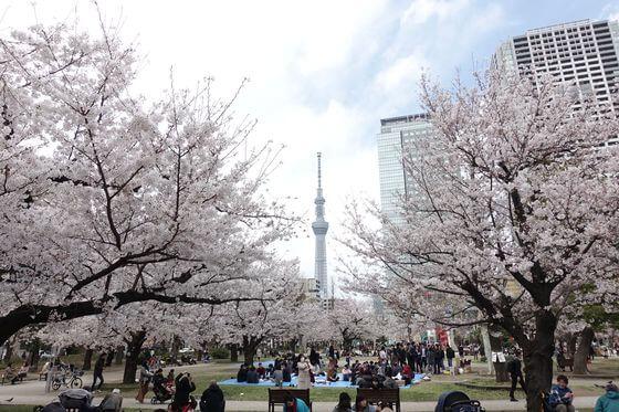 錦糸公園 墨田区 桜