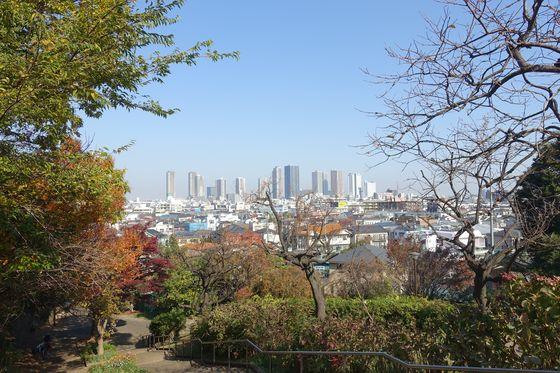 日吉公園 秋 景色