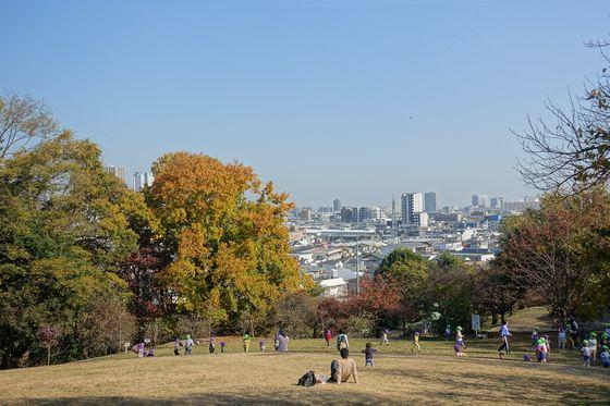 日吉公園 紅葉 景色