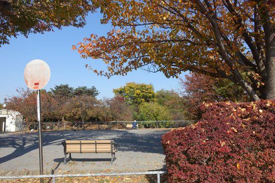 紅葉 日吉公園