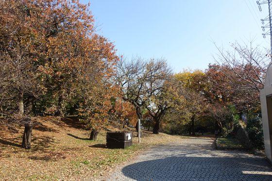 秋 日吉公園