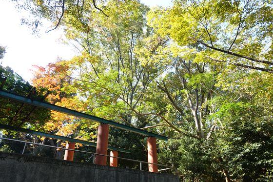 秋 本門寺公園