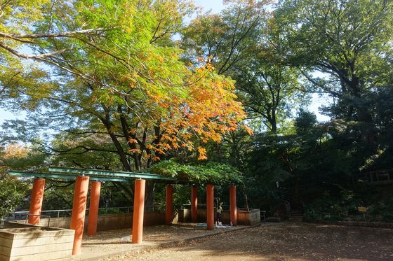 本門寺公園 秋