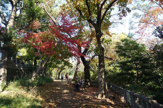 本門寺公園 モミジ
