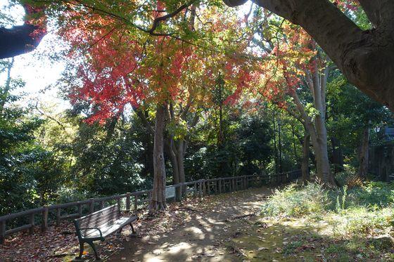 本門寺公園 カエデ