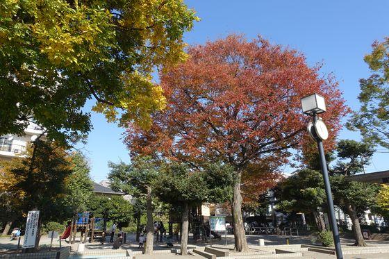 秋 目黒区 公園