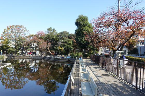清水池公園 秋