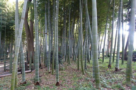 すずめのお宿緑地公園 竹林