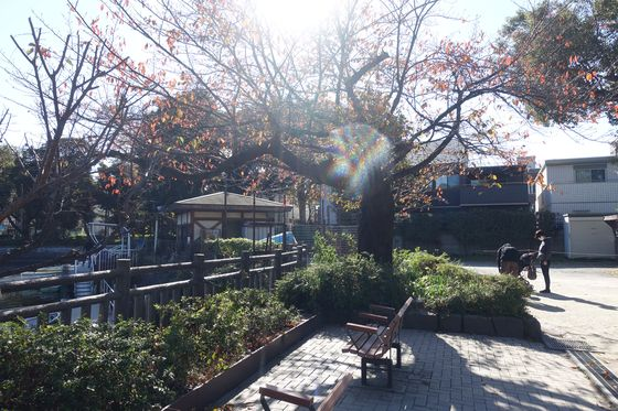 碑文谷公園 桜 紅葉