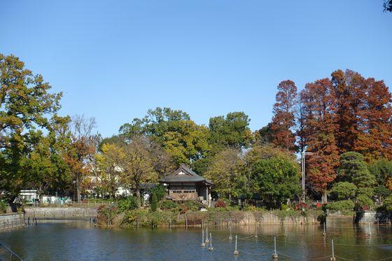 碑文谷公園 紅葉