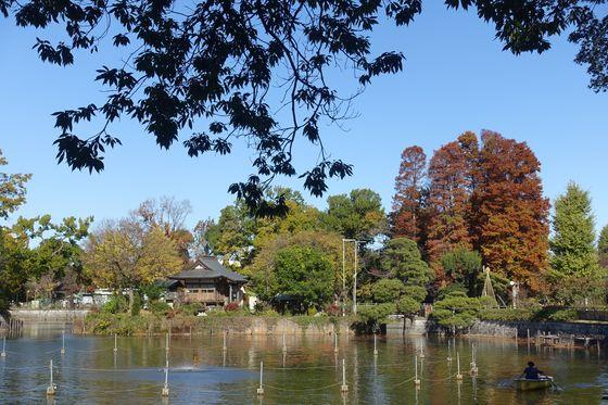 紅葉 碑文谷公園