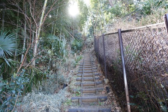 神庭緑地 階段