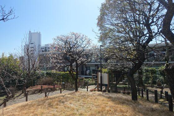 大田区 梅 穴場