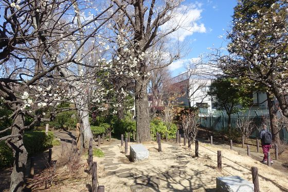 蘇峰公園 梅園